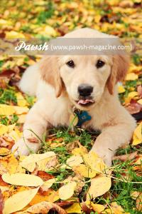 pawsh-magazine-zeke-4