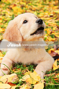 pawsh-magazine-zeke-5