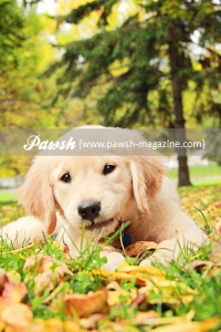 pawsh-magazine-zeke-9
