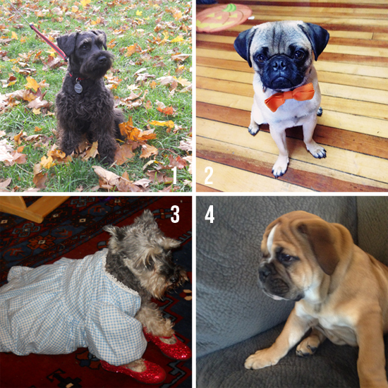Dog-contest-October-Nominees