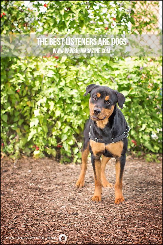 Pawsh-Magazine-Dog-Quote-20