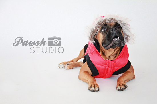 Pawsh-Studio-Holiday-Dog-Prints-1