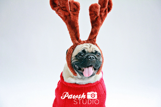 Pawsh-Studio-Holiday-Mini-Sessions-Pug-1