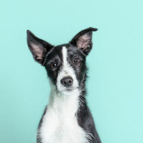 pawsh-studio-how-to-keep-dogs-young-41