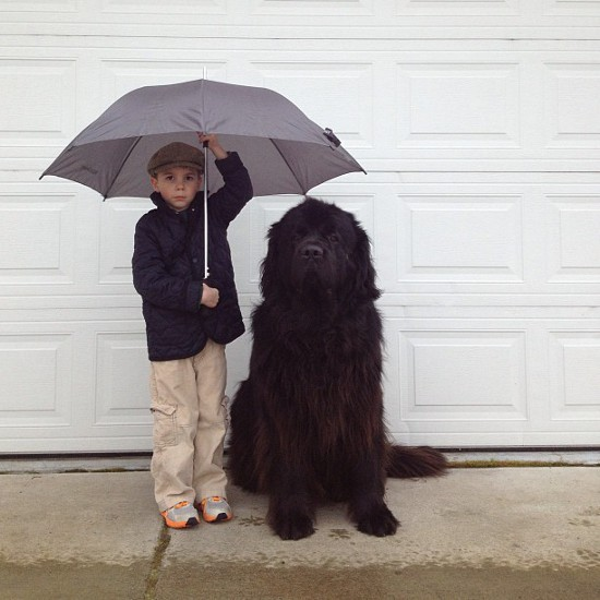 tibetan-mastiff-and-boy-1