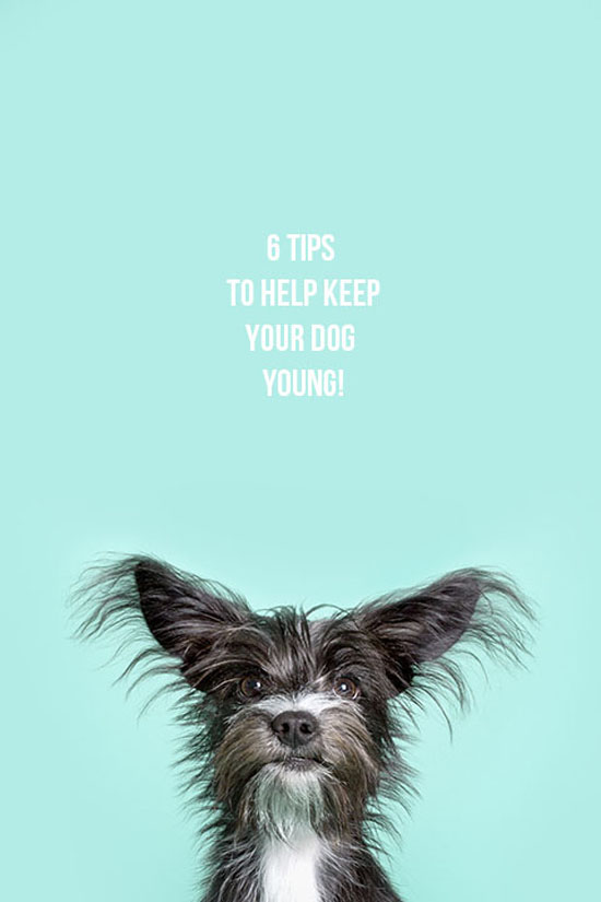 Pawsh-Magazine-How-to-keep-dogs-young-1