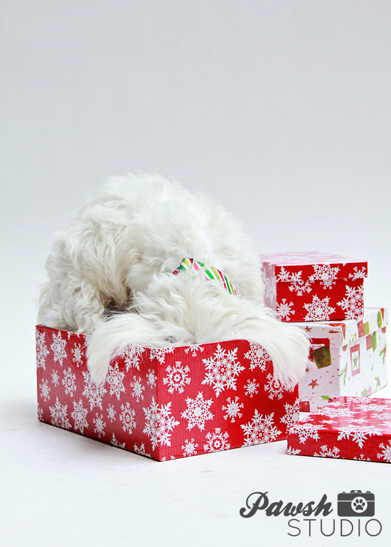 Pawsh-Magazine-dog-lovers-gift-guide-2
