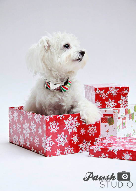 HOLIDAY GIFT GUIDE: 5 UNIQUE HOLIDAY GIFTS FOR DOG LOVERS | Pawsh ...