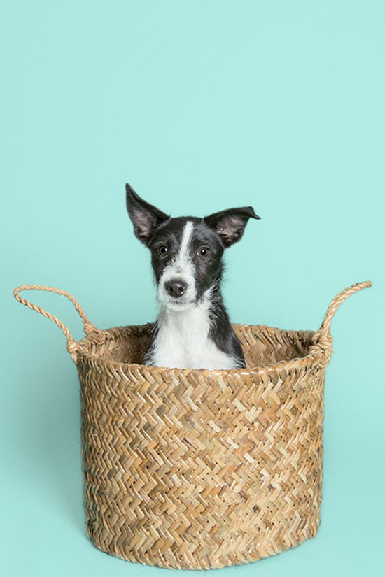 Pawsh-Magazine-how-to-keep-dogs-young-2