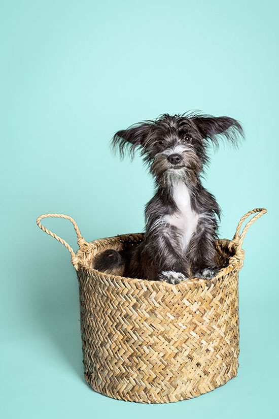 Pawsh-Magazine-how-to-keep-dogs-young-5