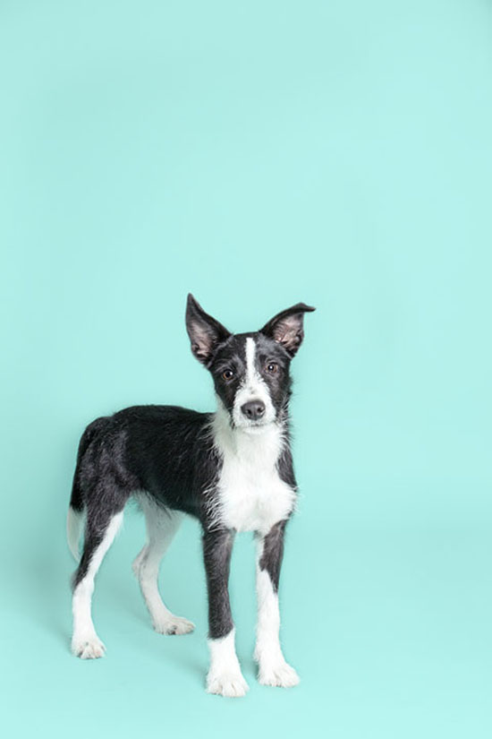 Pawsh-Magazine-how-to-keep-dogs-young-6