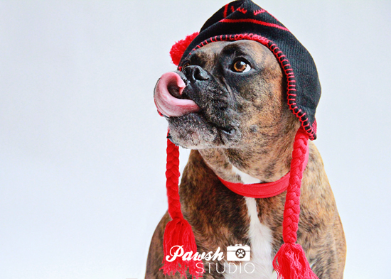 Pawsh-Studio-Toronto-dog-photographer-Christmas-dog-12
