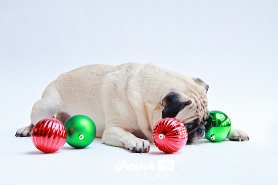 Pawsh-Studio-Toronto-dog-photographer-Christmas-dog-17