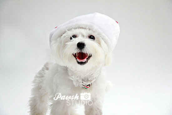 Pawsh-Studio-Toronto-dog-photographer-Christmas-dog-18