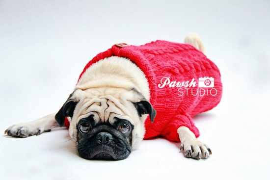 Pawsh-Studio-Toronto-dog-photographer-Christmas-dog-20