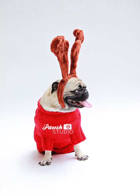Pawsh-Studio-Toronto-dog-photographer-Christmas-dog-21
