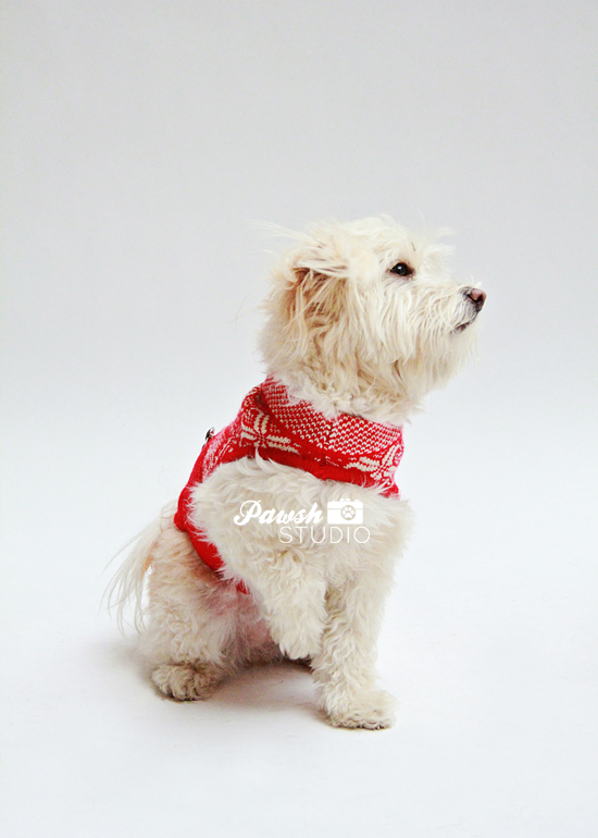 Pawsh-Studio-Toronto-dog-photographer-Christmas-dog-9