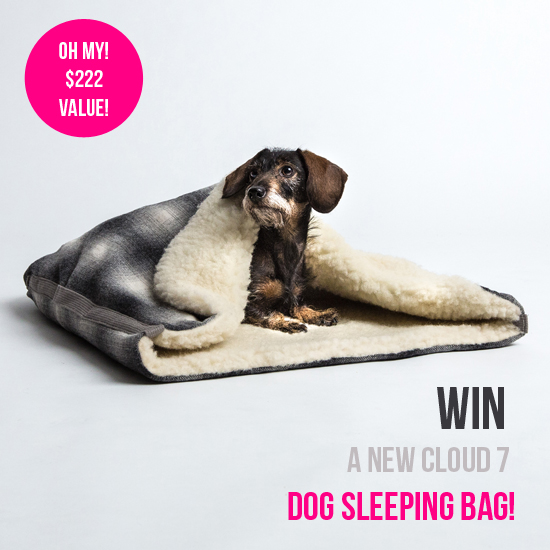 Pawsh-Magazine-dog-sleeping-bag-1
