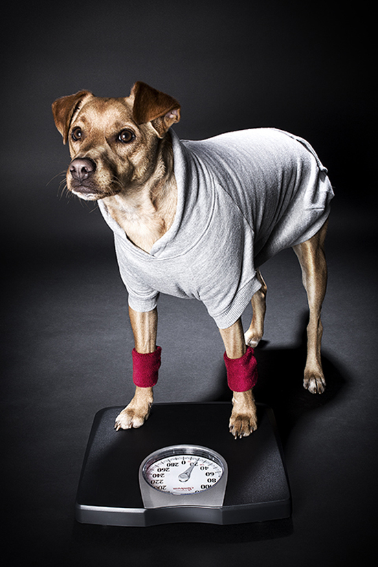 dog-friendly-workout-2-Pawsh-Magazine