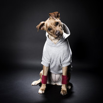 dog-friendly-workout-5-pawsh-magazine