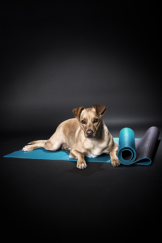 dog-friendly-workout-Pawsh-Magazine