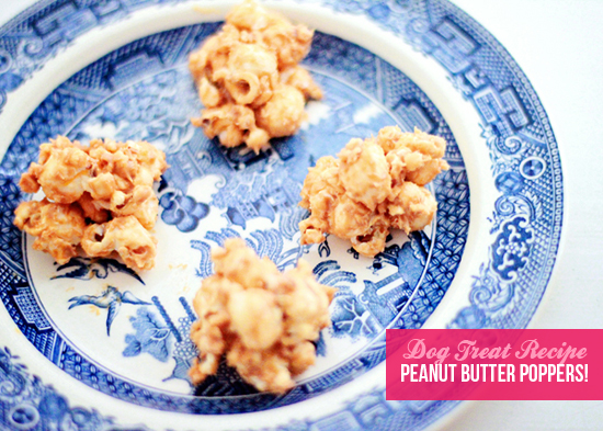 No-Bake-Dog-treat-recipe-Pawsh-Magazine