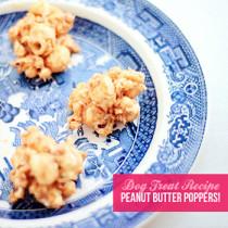no-bake-dog-treat-recipe-pawsh-magazine