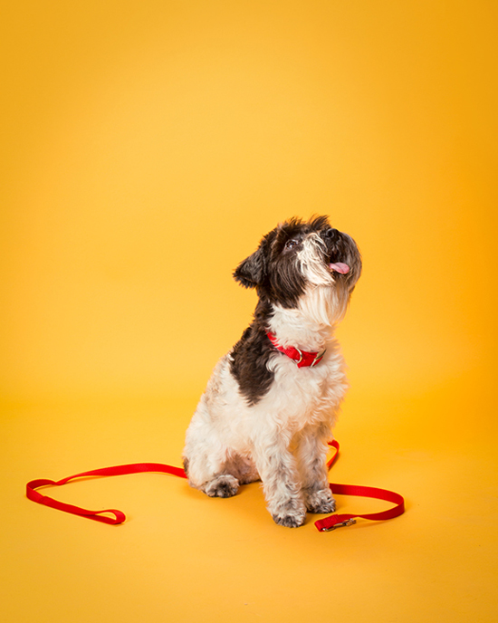 Pawsh-Magazine-Dog-Leash-Manners-3