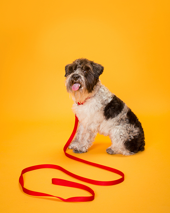 Pawsh-Magazine-Dog-leash-manners