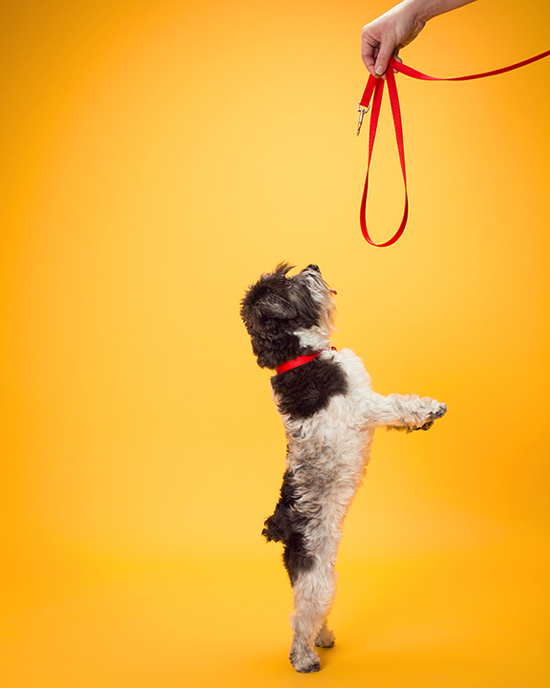 Pawsh-Magazine-dog-leash-manners-4