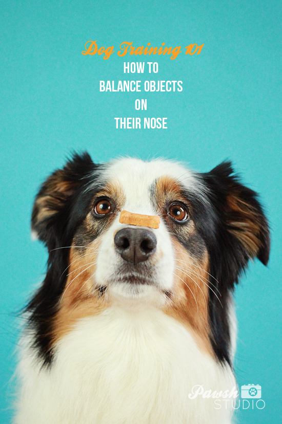 Pawsh-dog-training-how-to-balance-on-nose-1