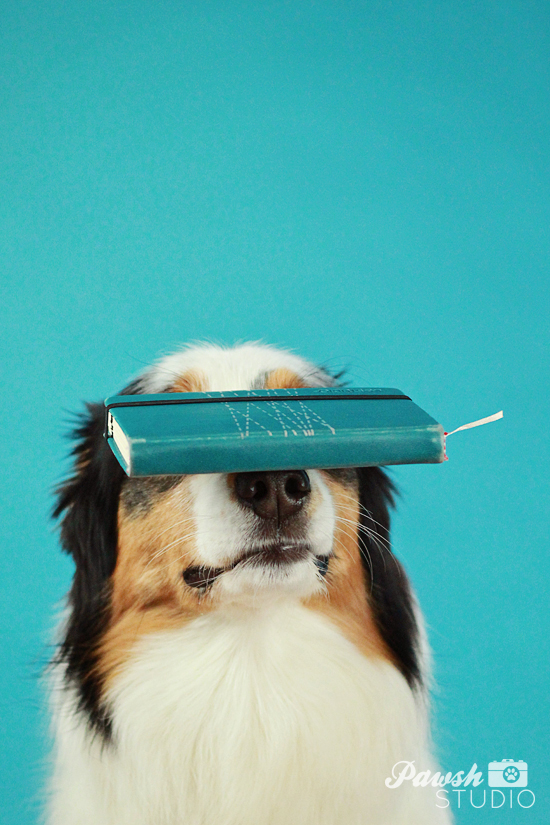 Pawsh-dog-training-how-to-balance-on-nose-3