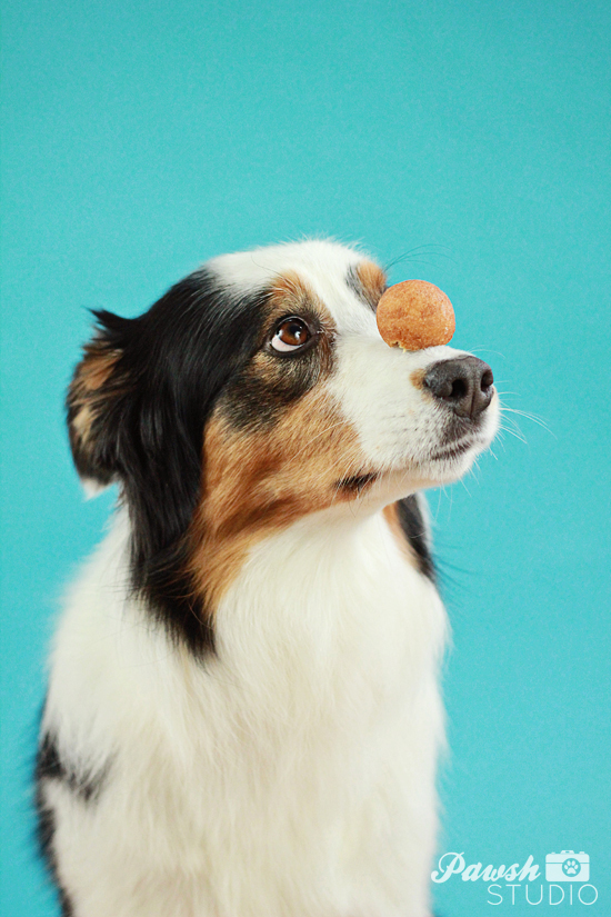Pawsh-dog-training-how-to-balance-on-nose-6