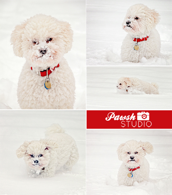 Toronto-pet-photographer-Pawsh-Studio-snowy-dogs-550