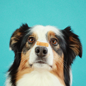 PAWSH STUDIO: BOOK YOUR DOG'S FINE ART PHOTO SESSION!