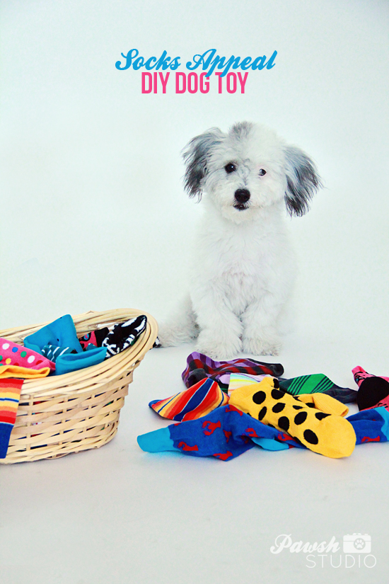 DIY-Dog-Toy-Pawsh-Magazine-1