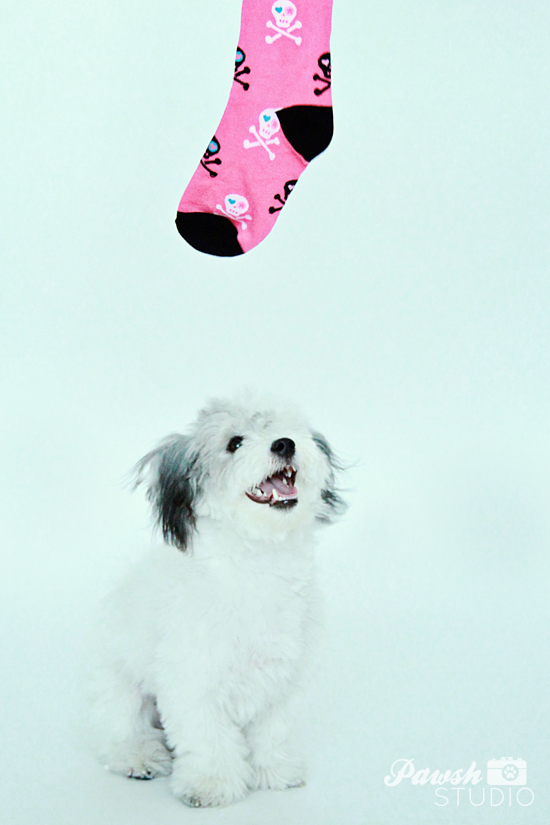 DIY-Dog-Toy-Pawsh-Magazine-3
