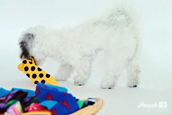 DIY-Dog-Toy-Pawsh-Magazine-4