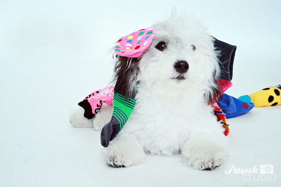 DIY-Dog-Toy-Pawsh-Magazine-5