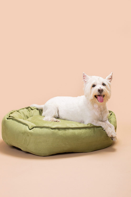 Green-pet-products-Pawsh-Magazine-4