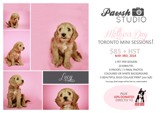 PAWSH-Studio-Mother's-Day-Mini-Session-Promo-Poster