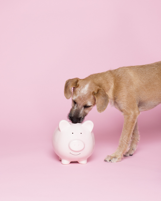 Pawsh-Magazine-How-to-save-money-on-your-pet-1