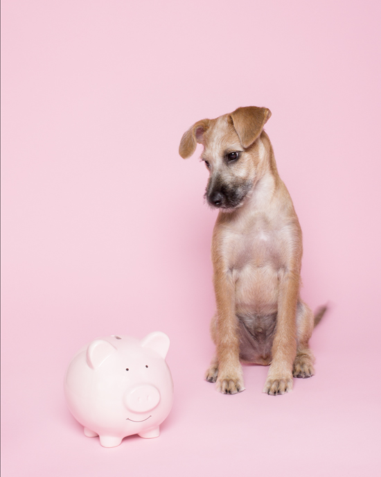 Pawsh-Magazine-How-to-save-money-on-your-pet-2