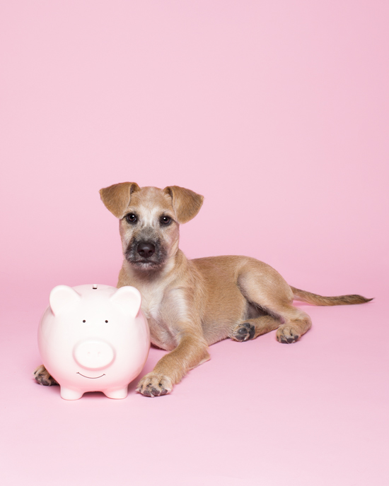Pawsh-Magazine-How-to-save-money-on-your-pet-3