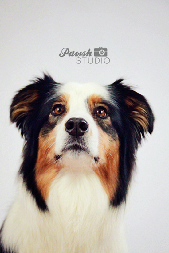 Pawsh-Magazine-and-Studio-Aussie-1-550