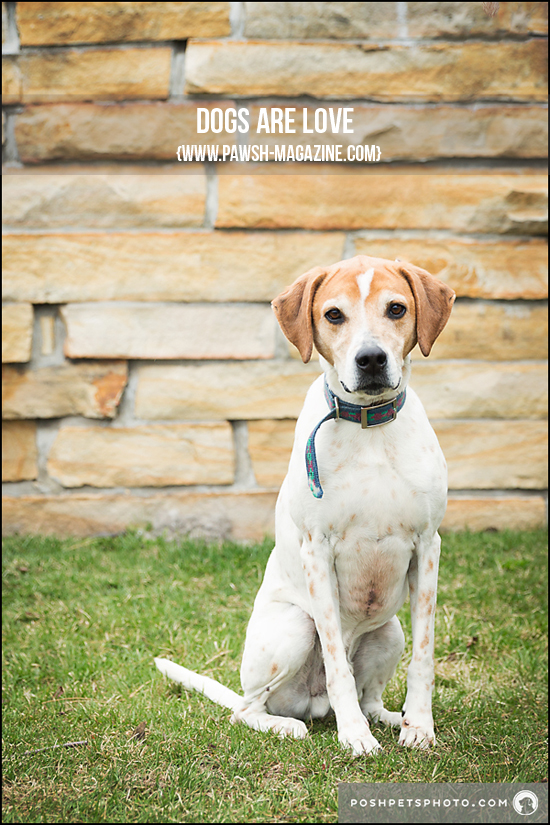 z-Posh-Pets-Photography-4 copy
