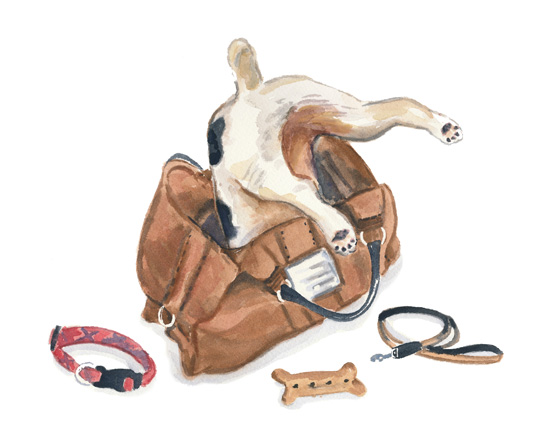 Dog-behaviour-dog-products-on-the-go-2