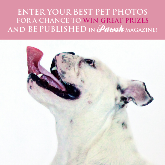 PAWSH PET PHOTOGRAPHY CONTEST!