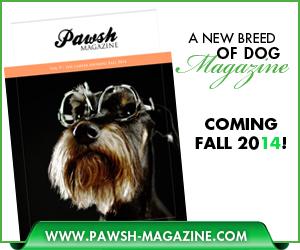 Pawsh-Magazine-spring-widget