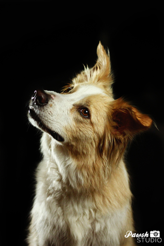 Toronto-dog-photographer-Pawsh-Studio-shadow-dog-7